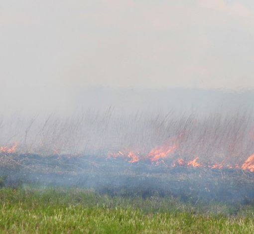 Spring Controlled and Planned Burns